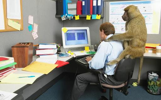 monkeyOnBack